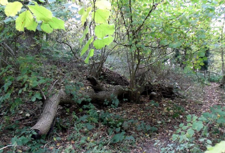 Woodland Churchdown Hill