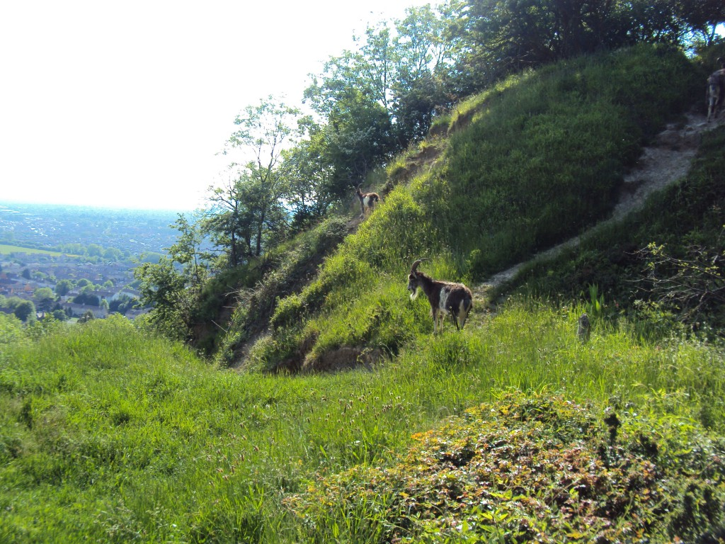 Hiking on Robinswood Hill, Gloucester