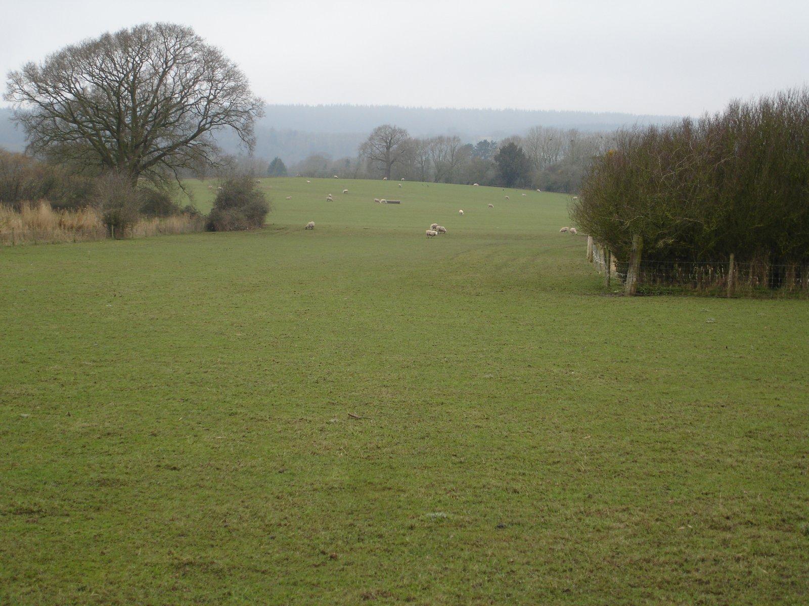 Fields Near Bullo Pill
