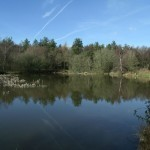 Fairplay Pond Forest Of Dean