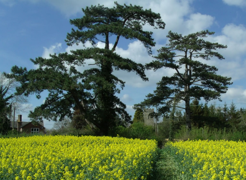 Hardwicke Church Rape Field