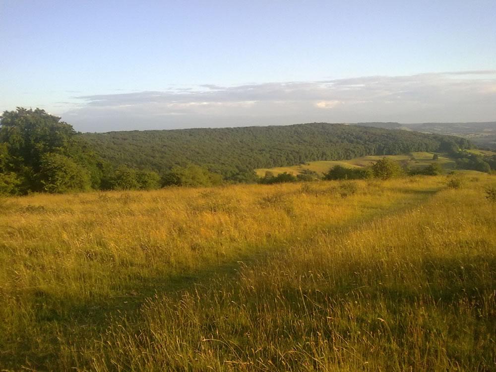 Randwick Wood