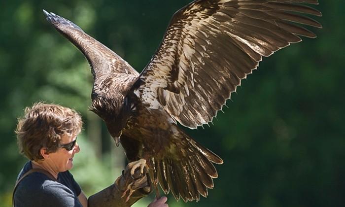 Birds-of-prey-Newent.jpg