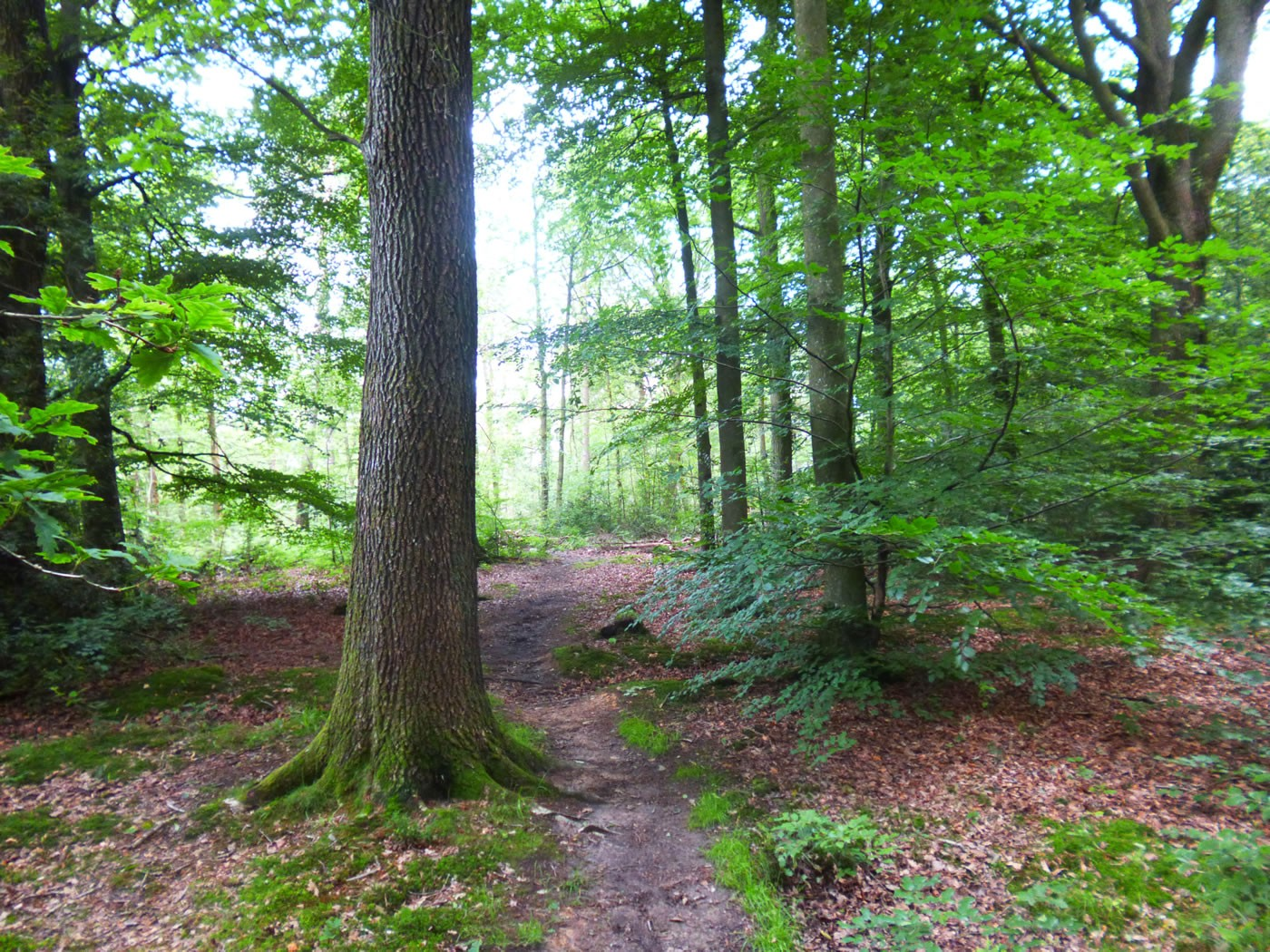 Forest Of Dean Walk – The Stenders To Drybrook