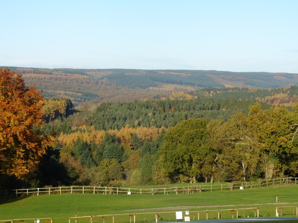 Deanwood Caravan and Campsite is a quiet campsite with direct access into the Forest of Dean