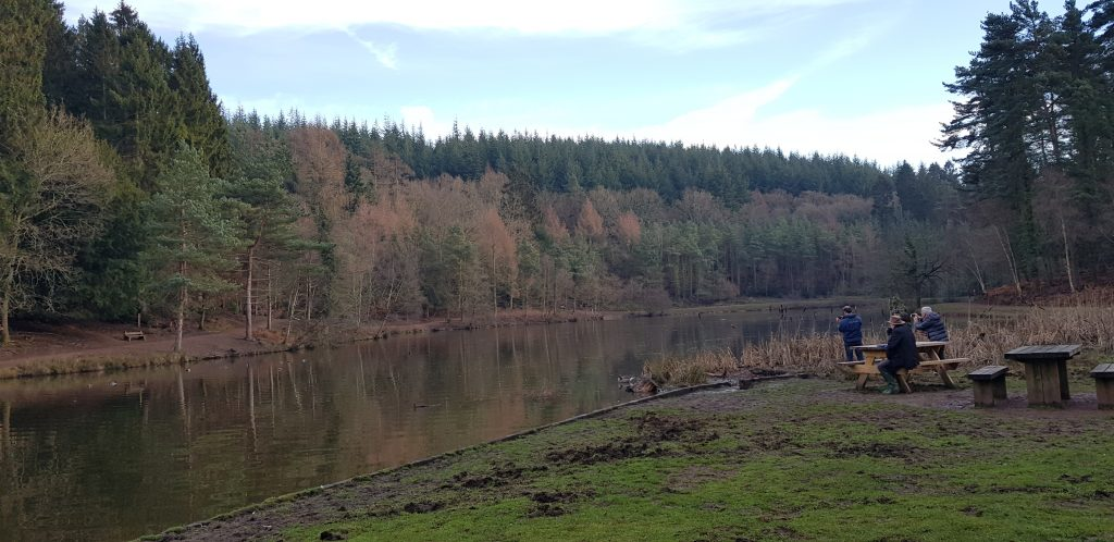 Forest of dean walks at mallards pike