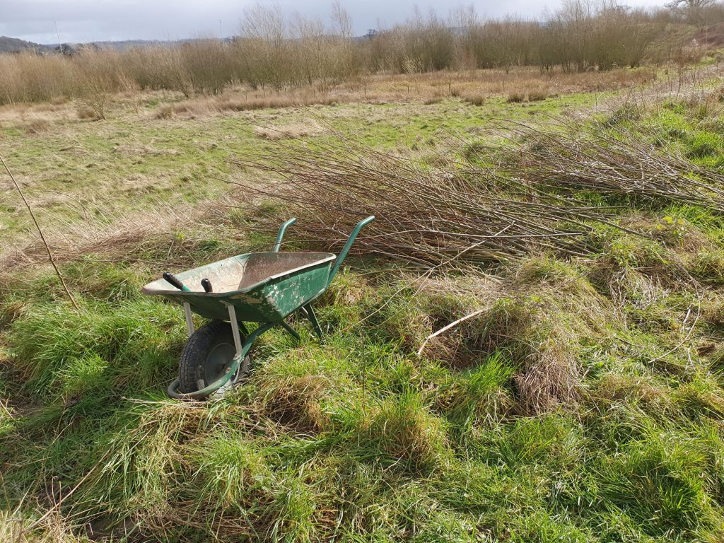 Volunteer work building hedgerows for the barn owl centre