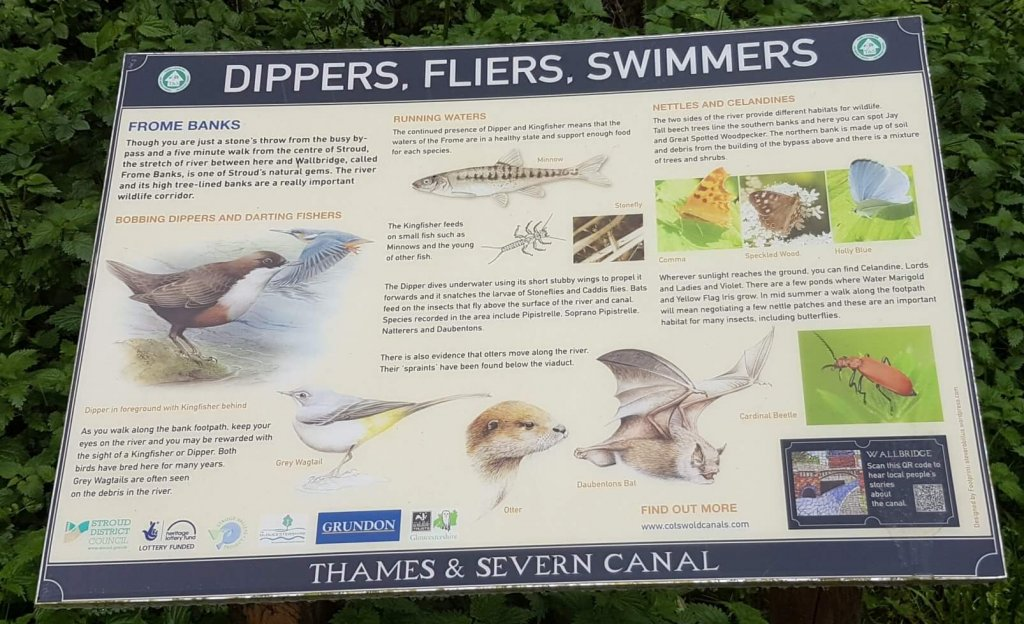 Wildlife of the canal and river