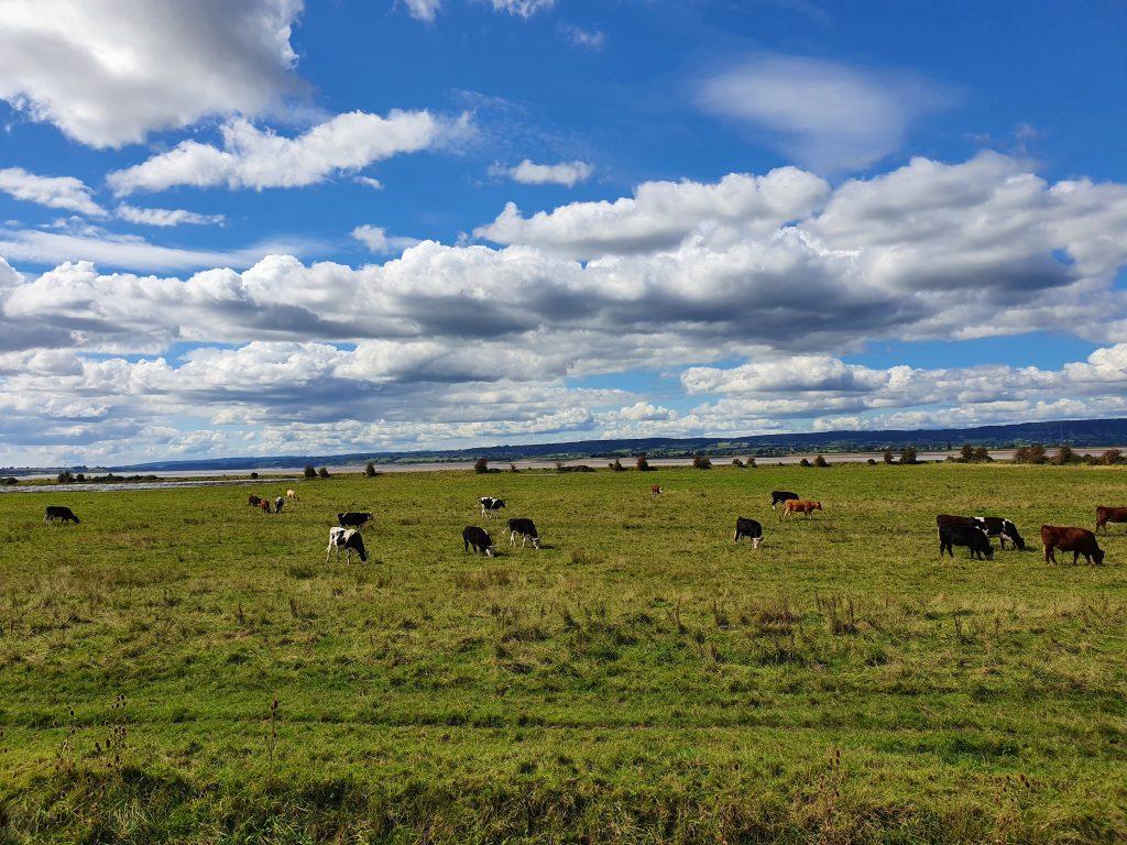 Farmland near River Severn