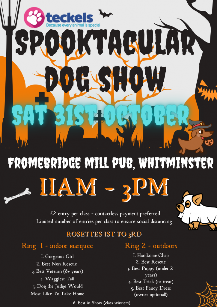 Halloween dog Show By Teckels Animal Sanctuary