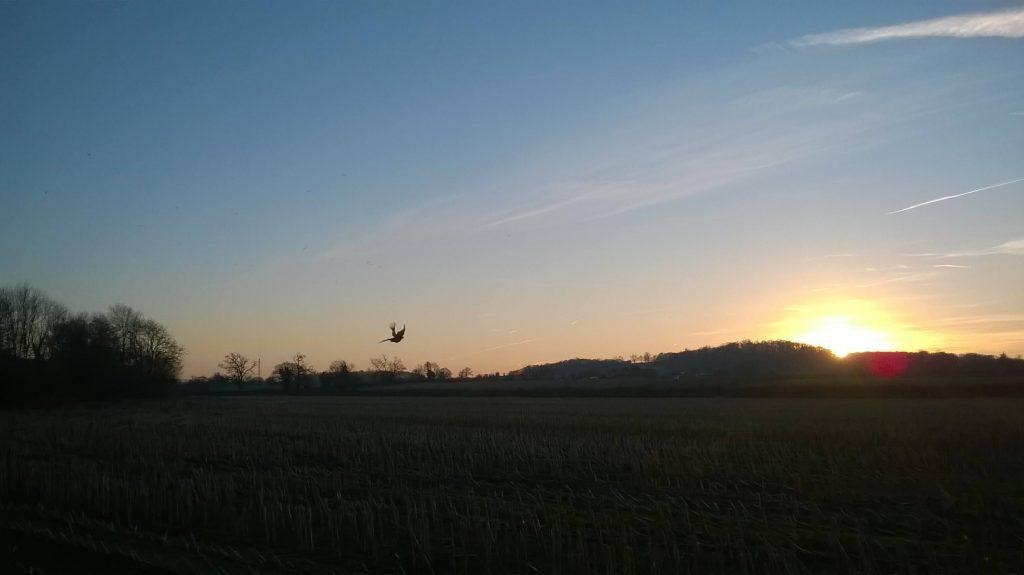 Elmore Sunsets
