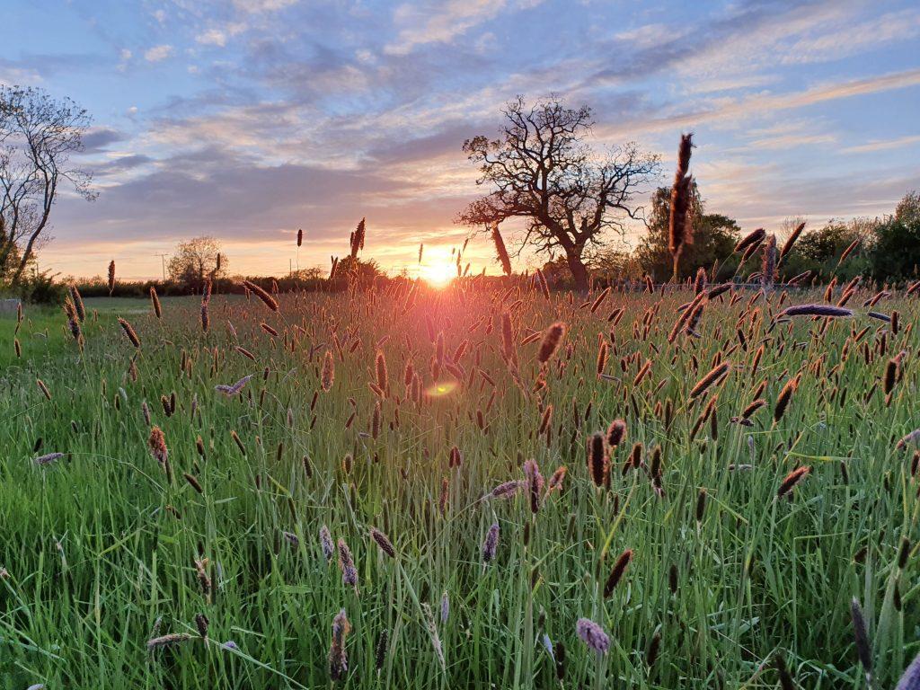 Meadow on the Glevum way walk