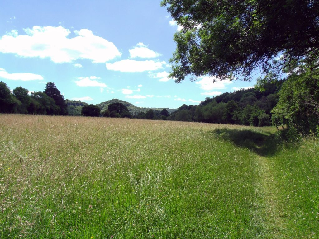 Wye valley meadows